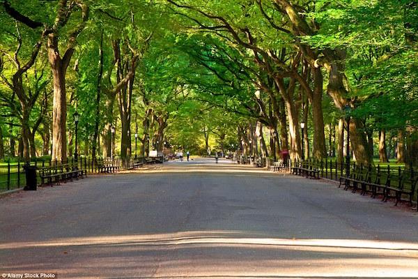 ニューヨークのセントラルパーク(アメリカ)