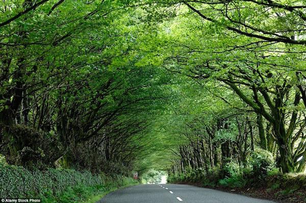 ミルトンアボットの田舎道(イギリス)