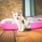8月8日は国際猫の日(世界猫の日)